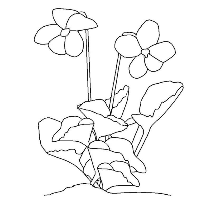 Coloriage de fleur - Coloriage de fleur ...