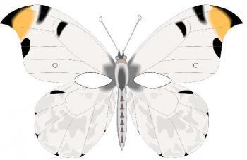 Masque papillon 1 - Masque papillon carnaval ...